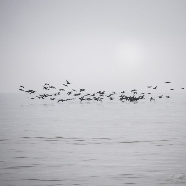 """Baltic Sea I"" de Zoltan Bekefy"