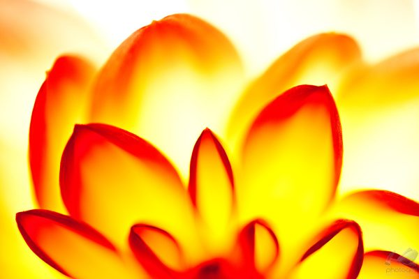 """""""Flowers II"""" de Wagner Silveira"""
