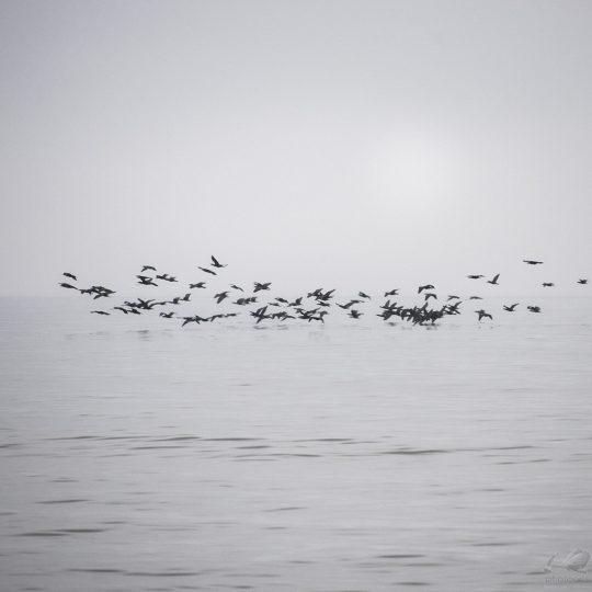 Baltic Sea I - Zoltan Bekefy