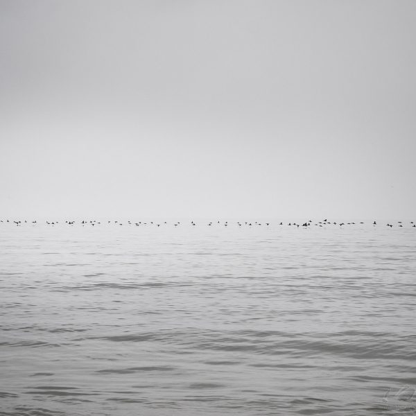 Baltic Sea II - Zoltan Bekefy.