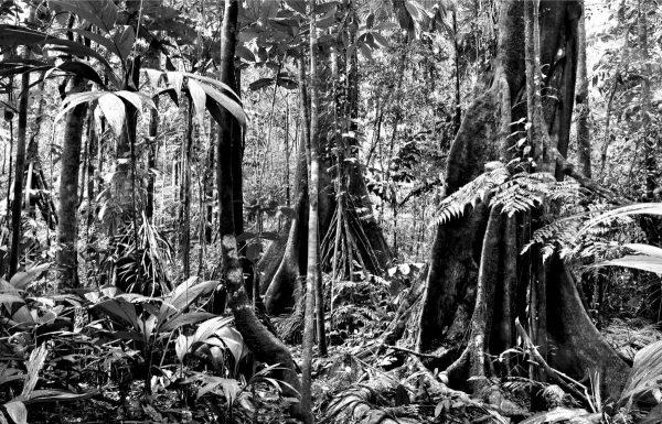 Floresta 1 - Adriano Gambarini