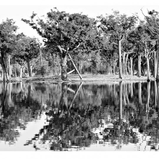 Floresta II - Adriano Gambarini