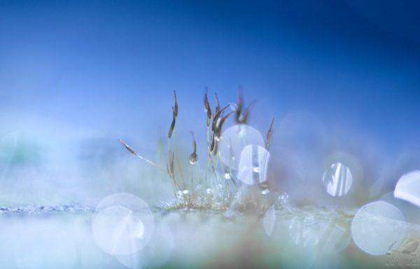 Frozen VII - Teuni Stevense