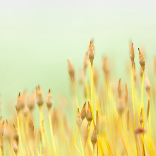 Moss - Teuni Stevense
