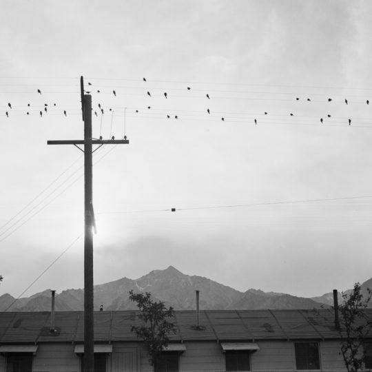 Pássaros no Fio - Ansel Adams