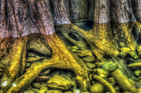 Roots - Brian Xavier