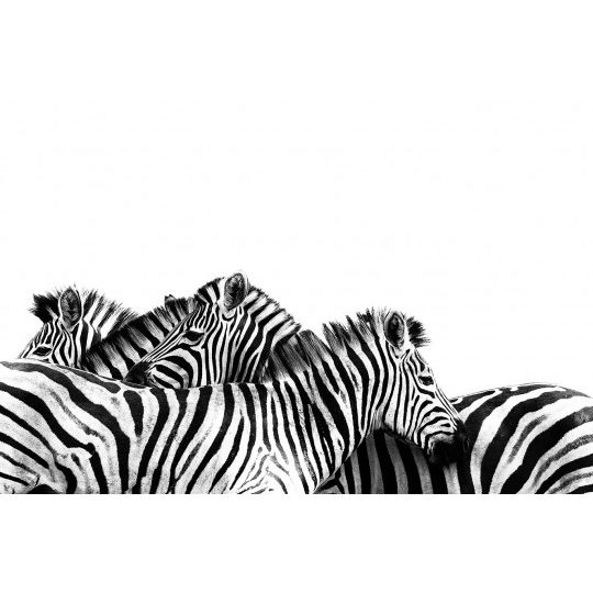 Zebras Black and White South África - Andreas Kunz