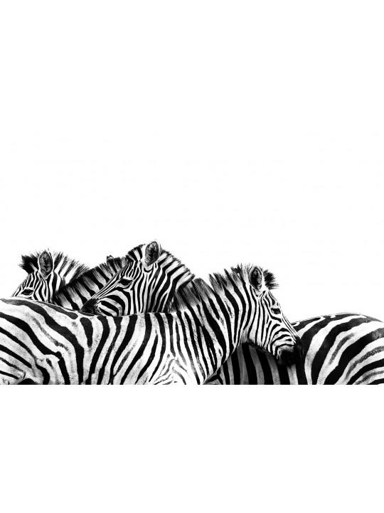 Zebras Black and White South África - Andreas Kunz