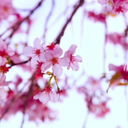 Flower I - Hanson Mao