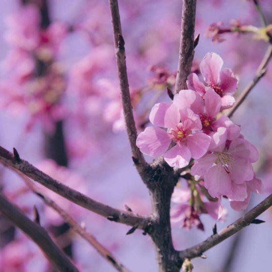Flower II - Hanson Mao