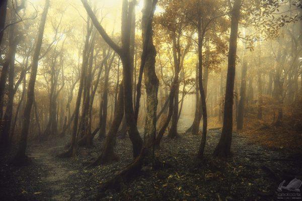 Golden Forest - Hanson Mao