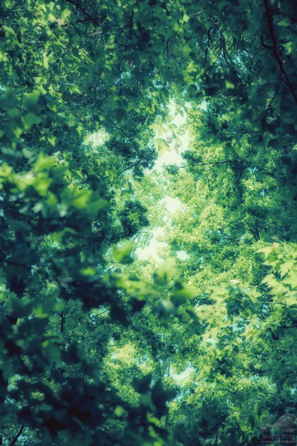 I Cant See the Sky - Hanson Mao