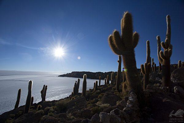 Cactus - Ricardo Martins