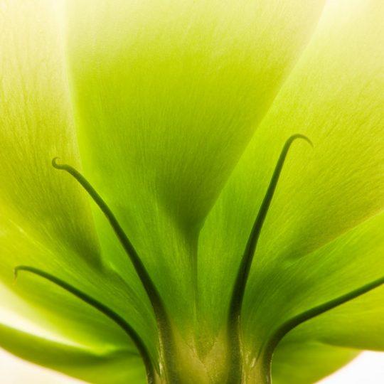 Flowers IX -Wagner Silveira