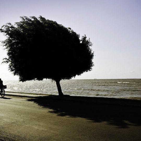 Mosqueiro - Janduari Simões