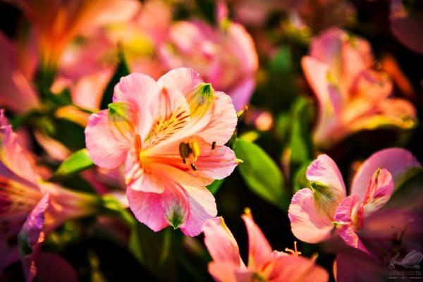 Pequena Flor Colorida - Egon Jais