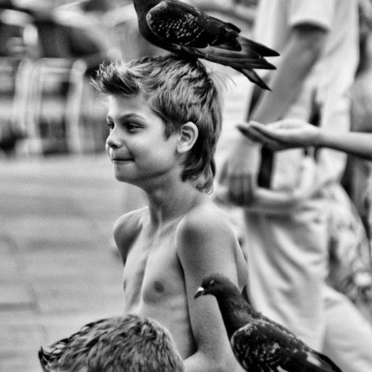 Pigeons I - Flávio Russo