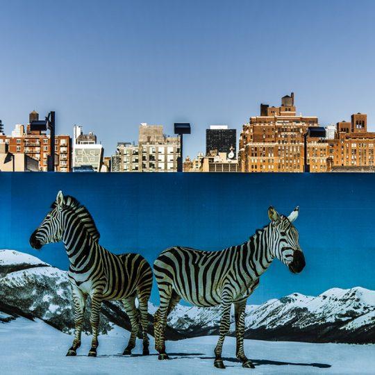 Urban Safari - João Bolan