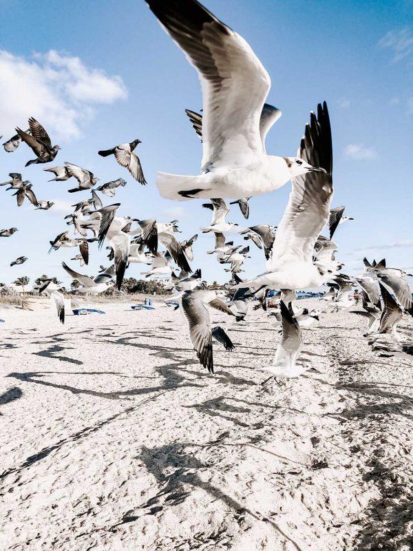 Flying white birds by Julia Kuzenkov