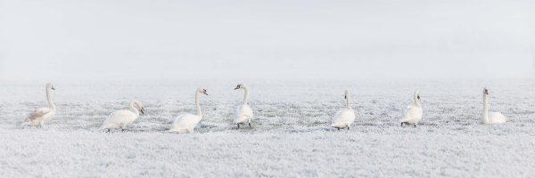winter-Ina-Hoekstra-Heerenveen-Nederland-scaled.jpg
